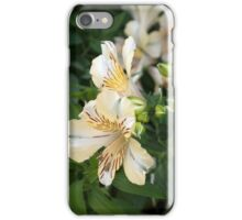 Longwood Gardens - Spring Series 1 iPhone Case/Skin