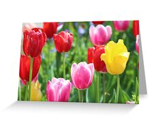 Pick A Color Greeting Card