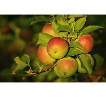 Apple Bouquet Photographic Print