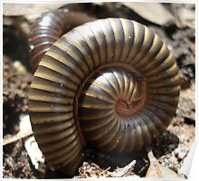 MILLIPEDES Poster