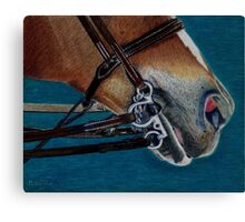 A Bit of Control - Study of the English Horse Bridle Canvas Print
