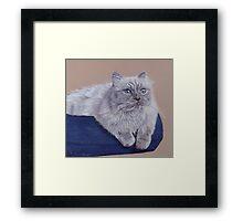 Bayou - A Portrait of a Himalayan Cat Framed Print