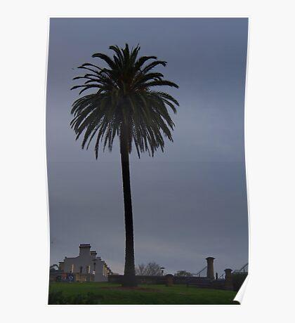 Prodigious Palm Poster