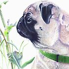 Pug &amp; Nature - Colored Pencil by Patricia Barmatz