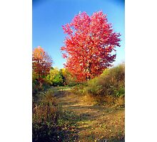 New England Autumn Photographic Print