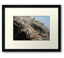 Crab Pot Framed Print