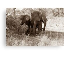 Cute baby elephant in South Africa [Sepia tone] Canvas Print