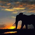 Elephant at Sunset by SophiaDeLuna