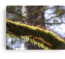 Blooming Moss Canvas Print
