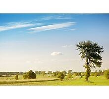 Rural grassland trees view Photographic Print