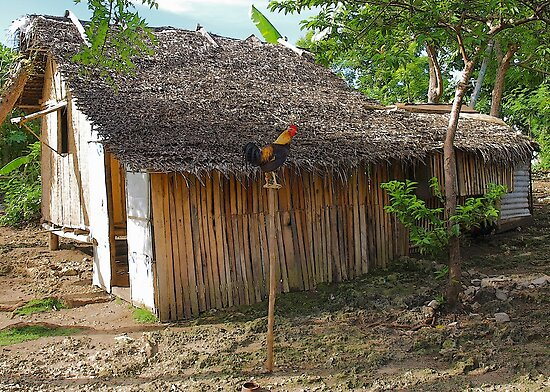 Filipino hut complete with fighting cock by Dave P
