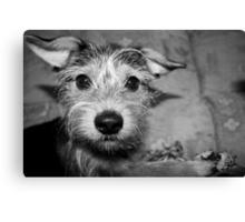 The Curious Dog - Holly Canvas Print
