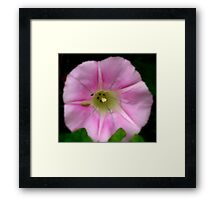 Soft Touch Of Pink Framed Print