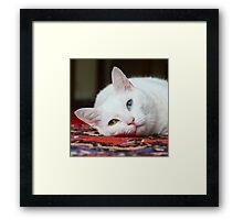 Charlie The White Pussy Cat Framed Print