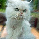 """Princess Kendra Series"" - Oh No,  Doggie Coming by Toni Kane"