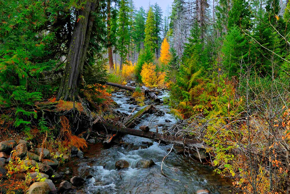 Jack Creek ~ Central Oregon ~ by Charles & Patricia   Harkins ~ Picture Oregon