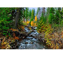 Jack Creek ~ Central Oregon ~ Photographic Print