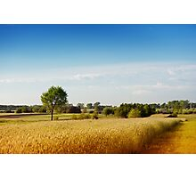Rural wheat field view Photographic Print