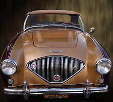 tootone healey by WildBillPho