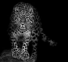 Hunter in the Night! by Mark Hughes