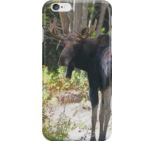 Maine Moose bull iPhone Case/Skin