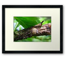 Mama Treehopper and the Kids...  Framed Print
