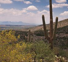 Desert Scene - Saguaro by Richard G Witham