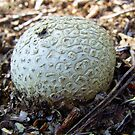 White round funghi by alaskaman53