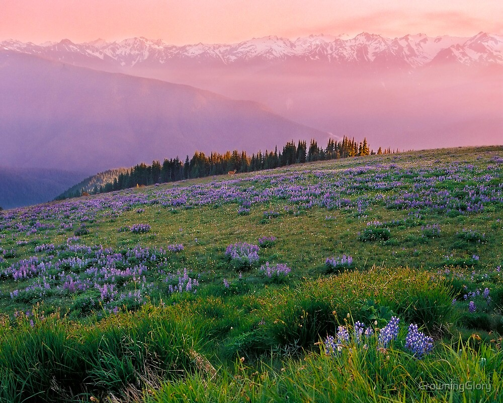 Hurricane Ridge by CrowningGlory