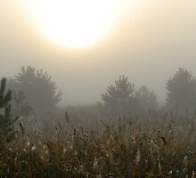 Pines, grassland and sunrise in fog by Antanas