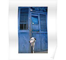 spot the dog - dalmation - cuba Poster