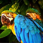 Parrots by cameraimagery