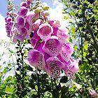 Bell Flower by Rick McFadden