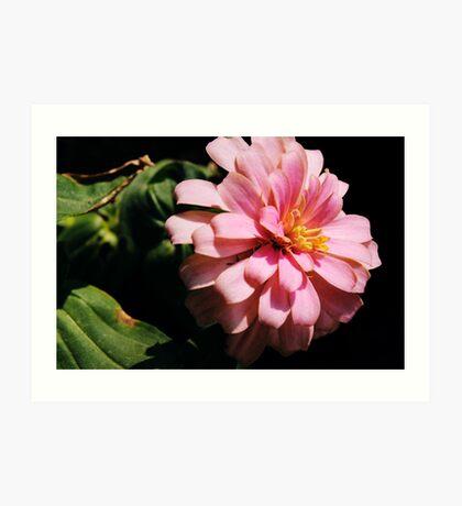 Ribbon Flower Art Print