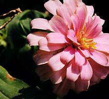 Ribbon Flower by Rick McFadden