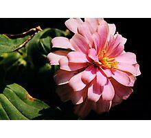 Ribbon Flower Photographic Print
