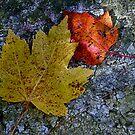Fallen Leaves by Jeannette Sheehy