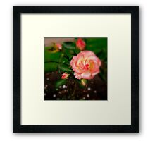A Touch Of Softness Framed Print
