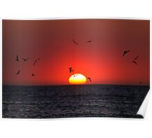 Sunset & Birds Poster