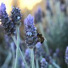 Lavender  with a Bee by TeAnne