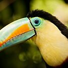 Toucan by vividpeach
