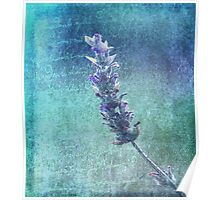 Of Love and Lavender  Poster