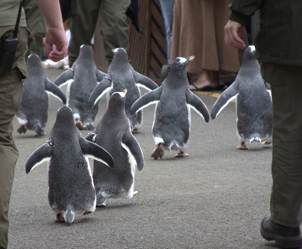 Penguin Parade by RSMphotography