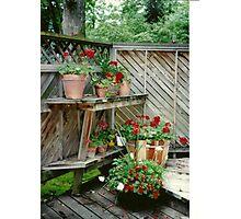 Geraniums and Terra Cotta Photographic Print