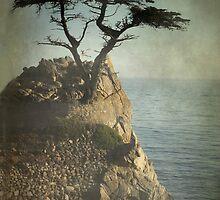 Lone Cypress , Carmel, Ca by korinneleigh