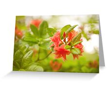 Rhododendron or Azalea Il Tasso flowers Greeting Card