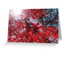 Black and Red Crescendo Greeting Card