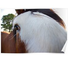 George The Horse Poster