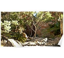 Standley Chasm, West MacDonnell Ranges, Alice Springs Poster