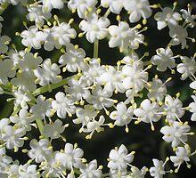 Tiny fleurs by Oil Water Artt